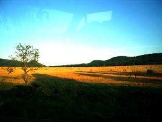 field by MA88