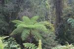 STOCK 008 Jungle Fever 4