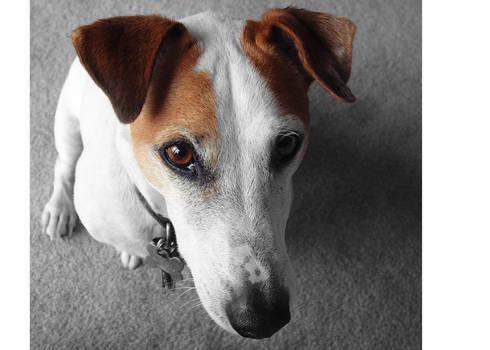 Poky Dog