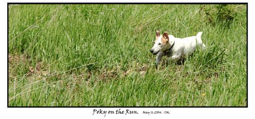Poky on the run
