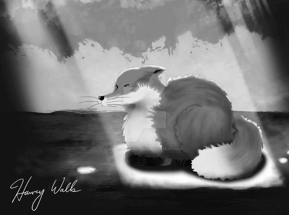 Fox Basking in a Sun Ray by XpressionsDesign
