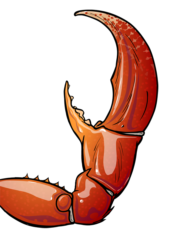 Crab Claw by mikeroush on DeviantArt