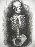 Human Anatomy: Skeleton Torso