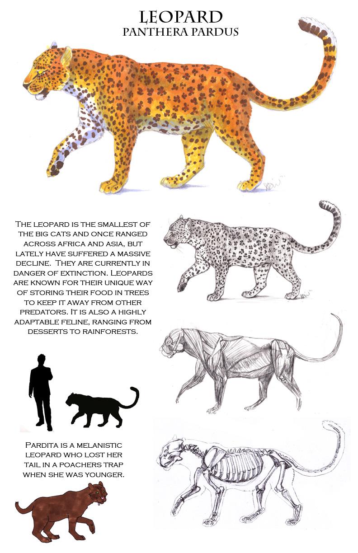 Leopard Anatomy Sheet