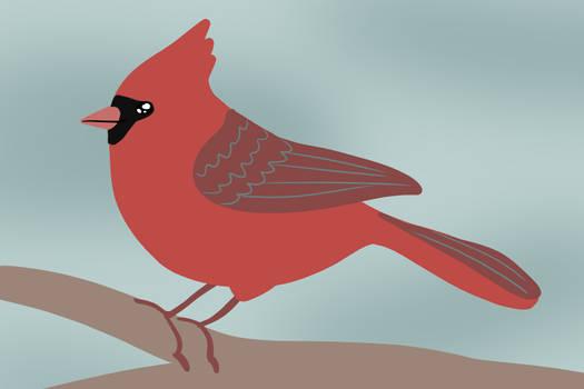 a cardinal