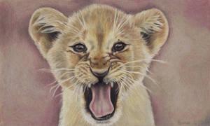 Roaring cub