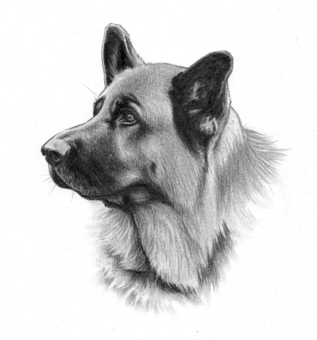 German shepherd head by NillaMustikka on DeviantArt