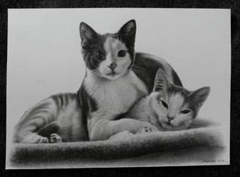 Cat portrait by NillaMustikka