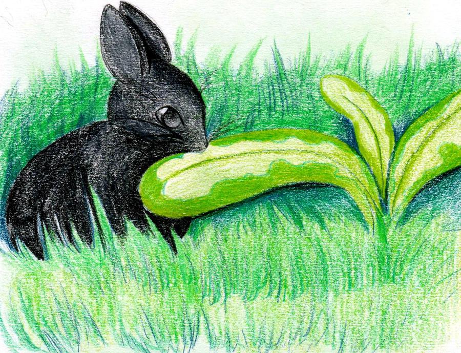 cute bunneh by NanakoHarrison