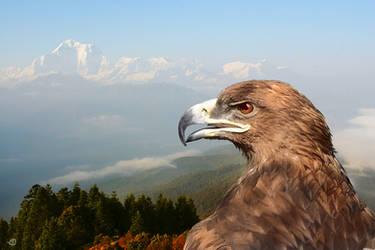 hawk eagle by StanOd