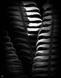 fern by StanOd