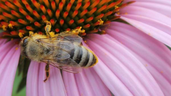 Busy Bee by Abigrace