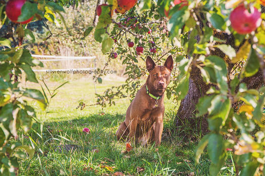 Protector of the Apple Tree