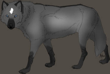 Grullo-wolf