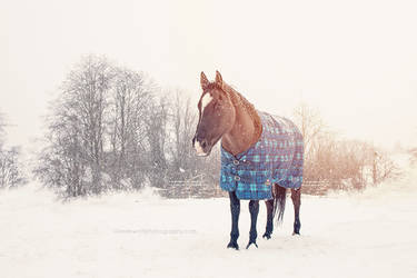 Winterly Fairy Land