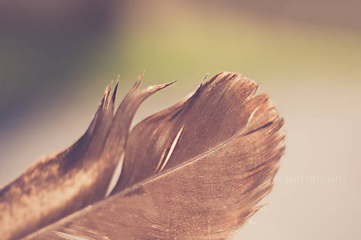 Summer Feather