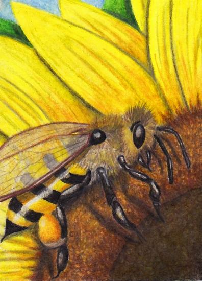 #65 Maja mal anders - Bee (ATC) by Womiko