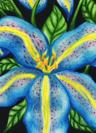 #75 Blue Lily ATC by Womiko