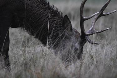 Mildew Deer by fraughtuk