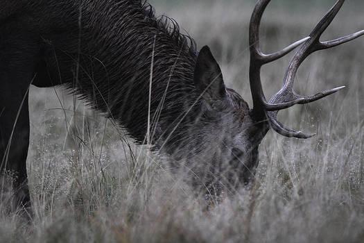 Mildew Deer