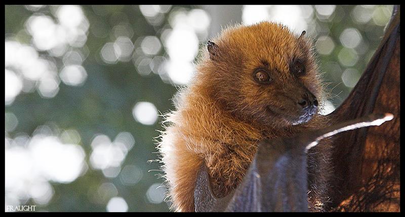 Rodriguez Bat by fraughtuk