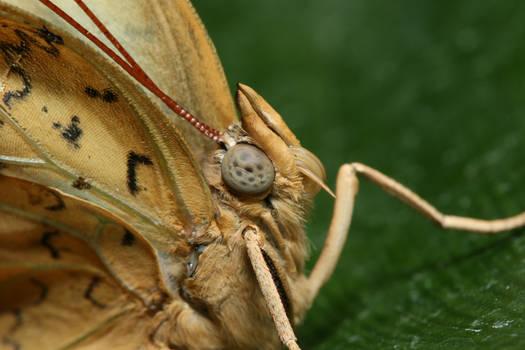 Alien Butteryfly