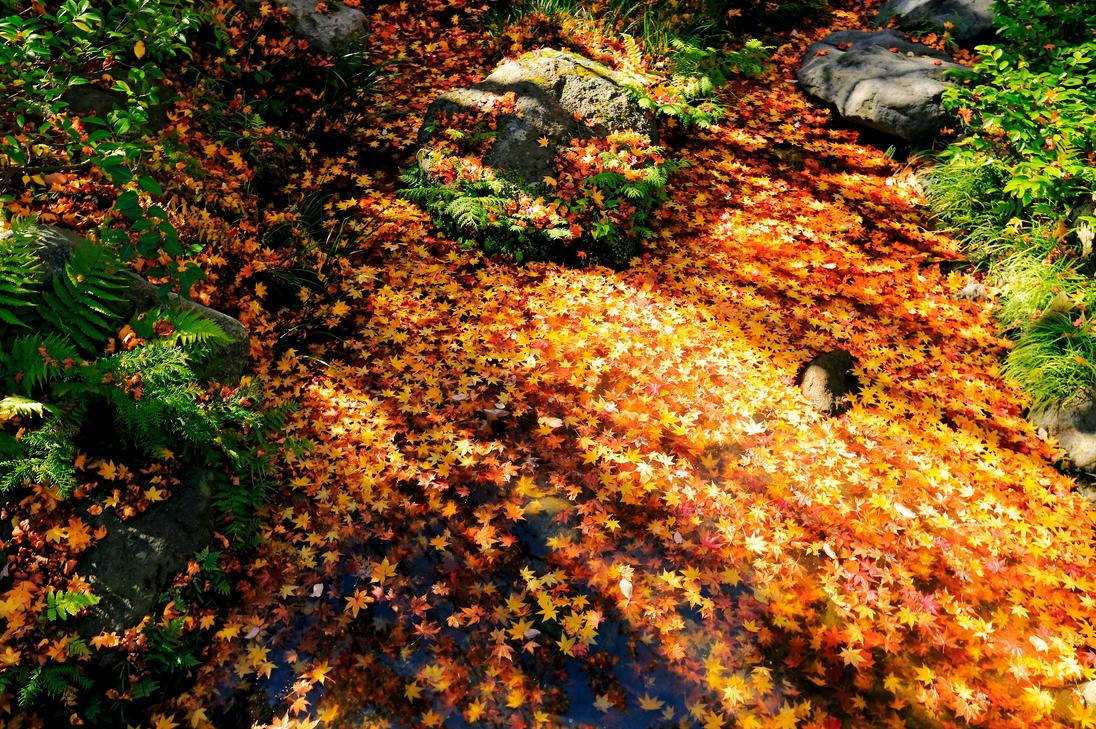 Autumn in Tokio by Nickdan