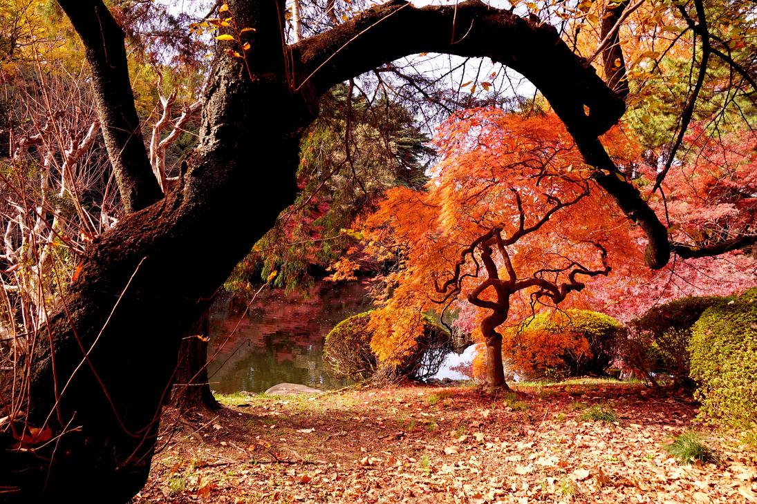 Autumn by Nickdan