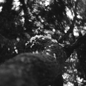 The Ballad of the Broken Birdie by ObservableUniverse