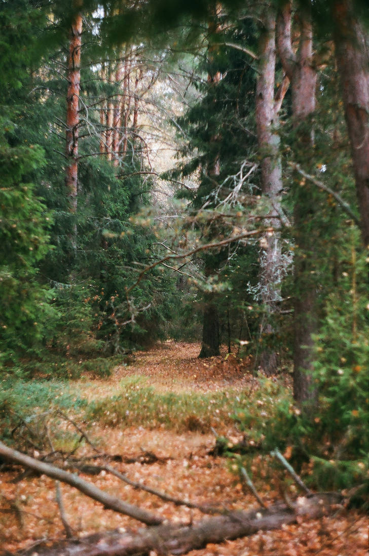 My Secret Path through the Autumn Forest by ObservableUniverse
