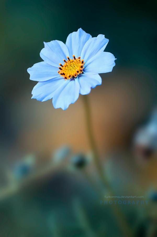 Little flower by fu-komma