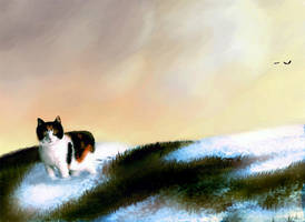My cat by OSW