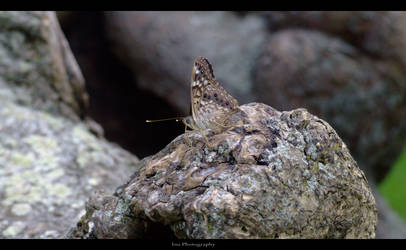 Butterfly by Learning-to-breath