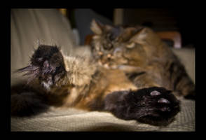Fuzz Toes by emoreth