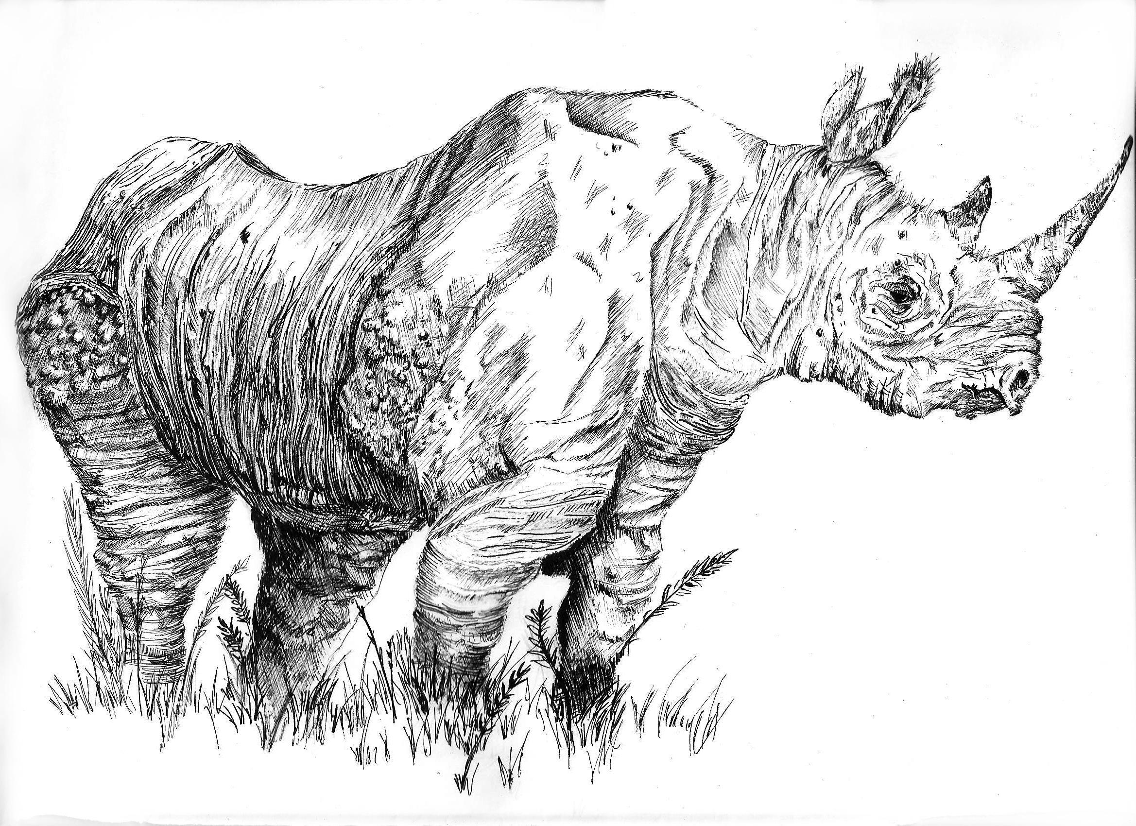 Line Drawing Rhinoceros : West african black rhino by joegroove on deviantart