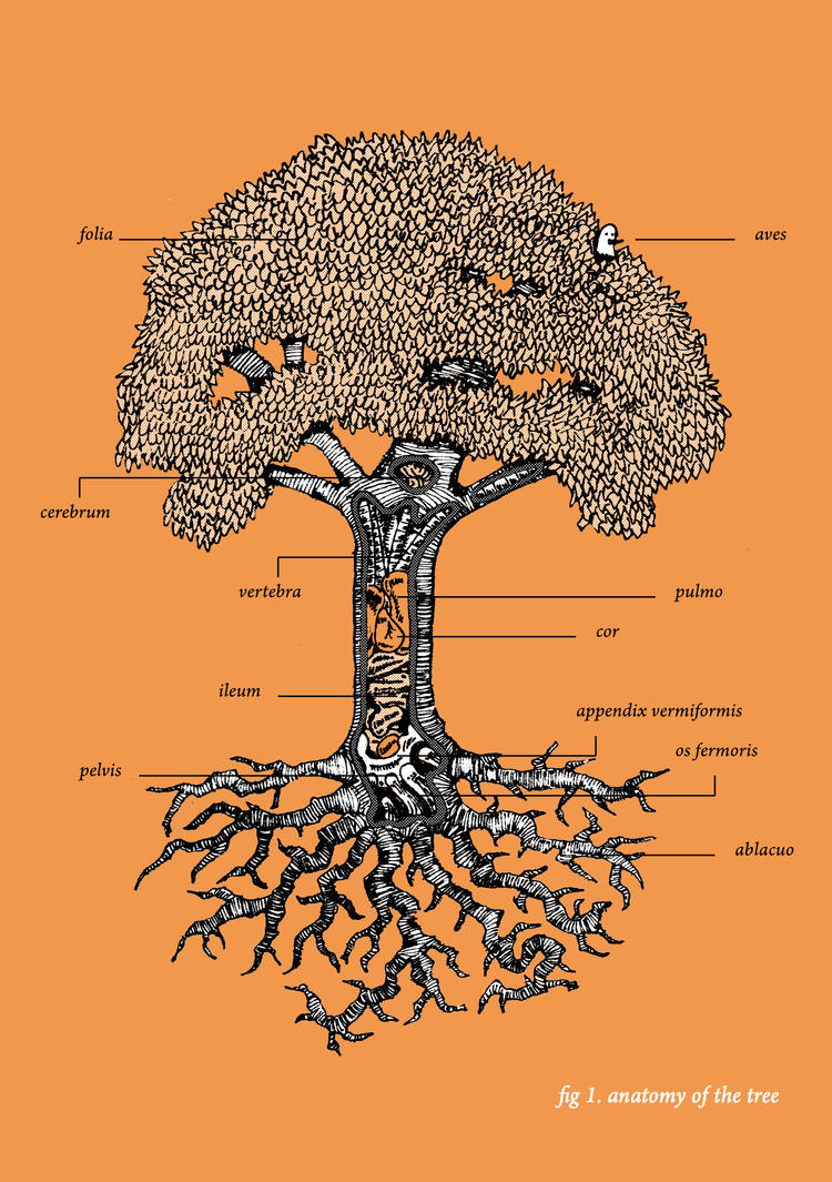 anatomy of a tree by benjaminography on DeviantArt