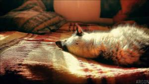 Little Nap on Sunday by ArgonPlasma