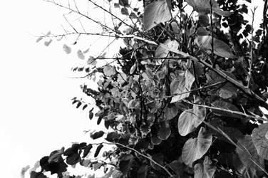 On Melancholy Hill by ArgonPlasma