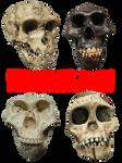 4 Pre-cut Skulls