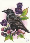 Day 12 - Common Raven