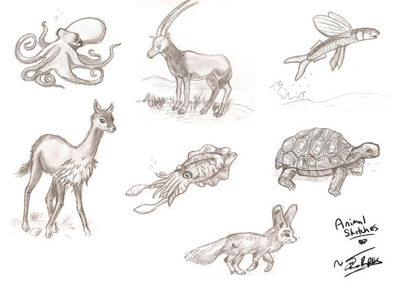 Simple animal sketches