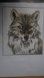 Little Wolf Drawing by Jakkie03