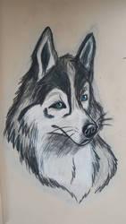 Husky 2