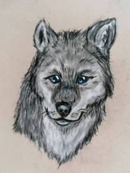 Litte Wolf Drawing
