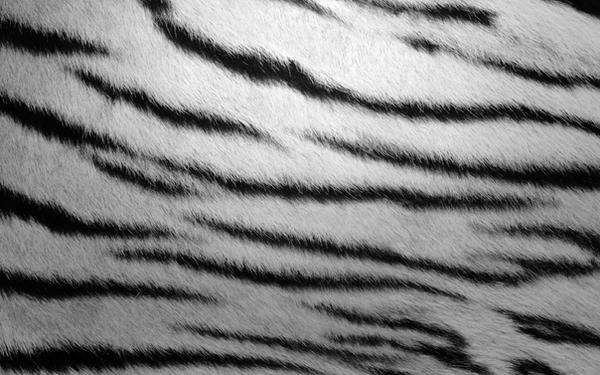 White Tiger by monkeymagico
