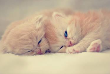 .Cats. by burcinesin
