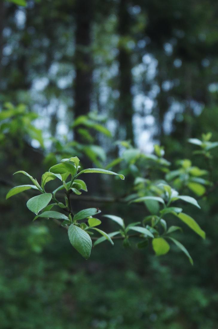 Foresty greens I by Linduzki