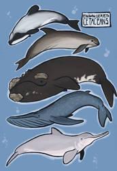 endangered cetaceans by AnnieFliesAway