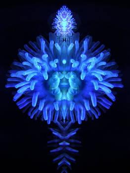 NMNE in Ultraviolet