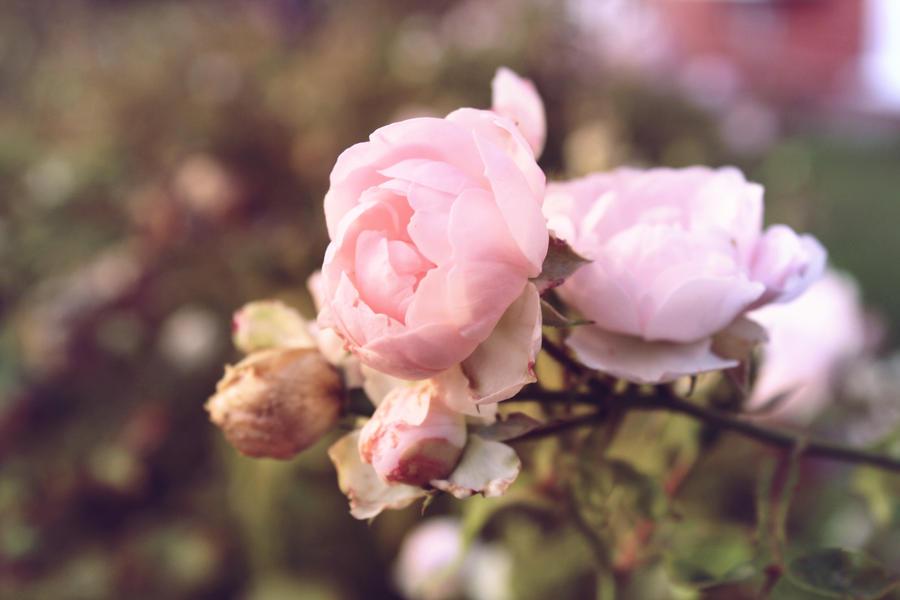 blush by synconi